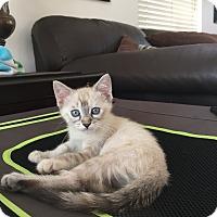 Adopt A Pet :: Stella Rosa - Cerritos, CA