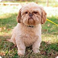 Adopt A Pet :: Jasper - Ponca City, OK