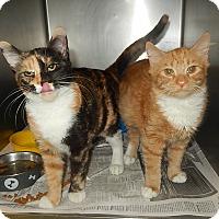 Adopt A Pet :: Jezzebelle and Rambo - Newport, NC