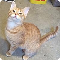 Adopt A Pet :: Beignet - Madisonville, LA