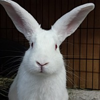 Adopt A Pet :: Hickory - Williston, FL