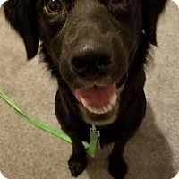 Adopt A Pet :: Noelle - Dayton, OH