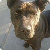 Adopt A Pet :: ISA - San Pablo, CA