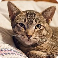 Adopt A Pet :: Yankee - Faribault, MN