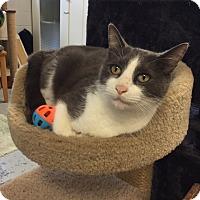 Adopt A Pet :: Porscha - San Leon, TX
