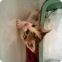Adopt A Pet :: Kimberly - wayne, MI