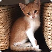 Adopt A Pet :: Angus - Santa Fe, TX