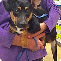 Adopt A Pet :: Misty - Savannah, GA