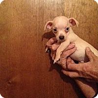 Adopt A Pet :: Beebop - Orange Cove, CA