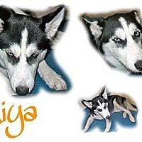 Adopt A Pet :: Miya - Seminole, FL