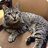 Adopt A Pet :: LACEY - Brea, CA