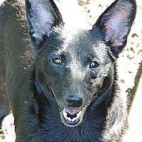 Adopt A Pet :: Lexi - Murfreesboro, TN