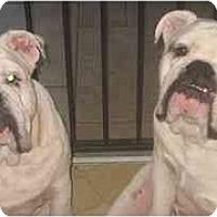 Adopt A Pet :: Oswald - San Diego, CA