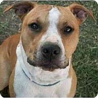 Adopt A Pet :: Hank - Sierra Vista, AZ