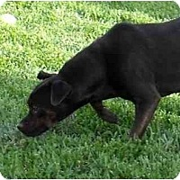 Adopt A Pet :: Blossom - Meridian, ID