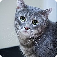 Adopt A Pet :: Snickers - Chicago, IL