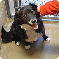 Adopt A Pet :: Millie - Wickenburg, AZ