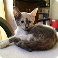 Adopt A Pet :: Belinda - Cerritos, CA