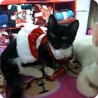 Adopt A Pet :: Merilyn - Medford, NJ