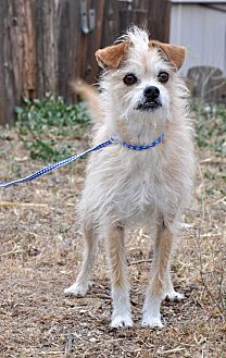 Terrier (Unknown Type, Small) Mix Dog for adoption in Acton, California - Jeffrey