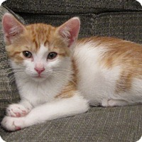 Adopt A Pet :: Jake - bloomfield, NJ