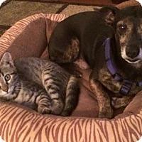 Adopt A Pet :: Oscar - Atlanta, GA