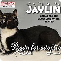 Cat Rescue Davenport Fl