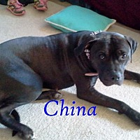 Adopt A Pet :: China - Halifax, NC