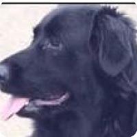 Adopt A Pet :: NIKKI - Red Bluff, CA