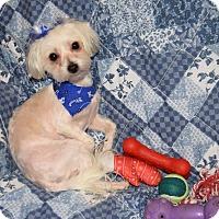 Adopt A Pet :: Blanche - Hazard, KY