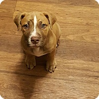 Adopt A Pet :: Fiona - Davison, MI