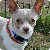 Adopt A Pet :: Bob - Meridian, ID
