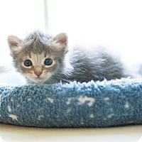 Adopt A Pet :: Mo - Houston, TX