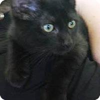 Adopt A Pet :: Teddy - Gettysburg, PA
