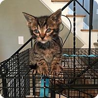 Adopt A Pet :: John - East Brunswick, NJ