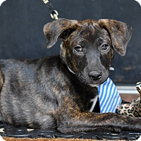 Adopt A Pet :: Junior - Baton Rouge, LA