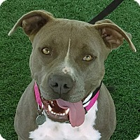 Adopt A Pet :: Queenie - Chula Vista, CA