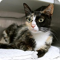 Adopt A Pet :: Miss Kitty - Hawthorne, CA