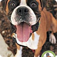 Adopt A Pet :: Magnus - Oceanside, CA