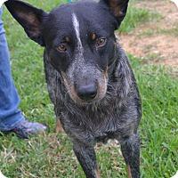 Adopt A Pet :: Mack - Beaumont, TX