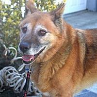 German Shepherd Dog Dog for adoption in San Diego, California - Winston