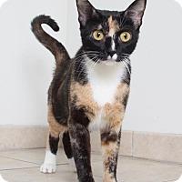Adopt A Pet :: Clara C160367 - Edina, MN