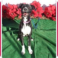 Adopt A Pet :: KILO - Marietta, GA