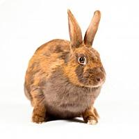 Adopt A Pet :: Merida - Kingston, ON