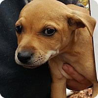 Adopt A Pet :: Blake - Seabrook, NH