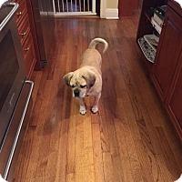 Adopt A Pet :: Cash - Mt. Prospect, IL