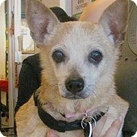Adopt A Pet :: JUSTINE - Beverly Hills, CA