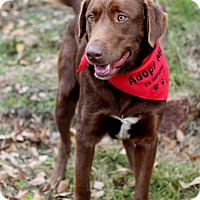 Adopt A Pet :: Brinkley - Dalton, GA