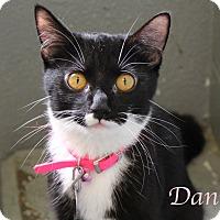 Adopt A Pet :: Dani - Bradenton, FL