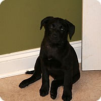 Adopt A Pet :: Tank - Marietta, GA